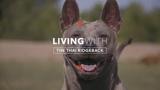 ALL ABOUT LIVING WITH THE THAI RIDGEBACK