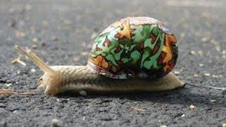 The Art of Snails and Snails in Art - Professor Steve Jones