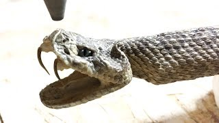 Rattlesnake Cut In Half With 60,000 PSI Waterjet - whats inside a rattle snake