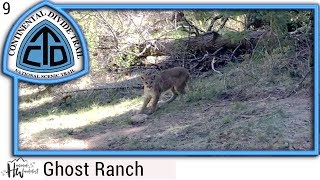 Episode 9: Ghost Ranch, New Mexico (Mountain Lion)