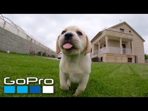 GoPro: Puppy Mashup