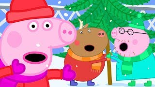 Peppa Pig Official Channel 🎄Christmas Tree Shopping with Peppa Pig