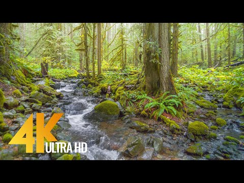 Rainy Day in a Forest - 4K Relaxation Video with Soothing Sound of Creek and Birdsongs