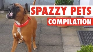 Crazy, Silly Pets Spazz Out || Hilarious Pet Comp