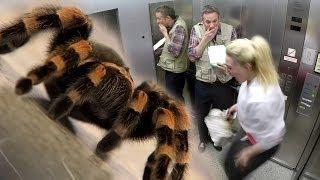 Elevator Spider Prank - iPad Magic with Simon Pierro