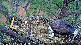 Berry College~Mom shows the little B12~9:24 AM 2019/02/19
