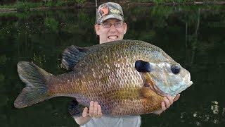 50 lb bluegill fishing challenge!! Catching 50 lbs of bluegill with best bluegill bait