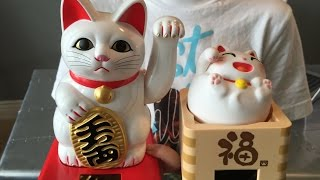 What's inside a Lucky Cat?