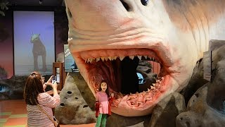 Florida Travel: Explore the Museum of Discovery and Science