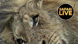 safariLIVE - Sunrise Safari - September 19, 2019