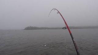 Topwater Striper Fishing SHALLOW Water. Foggy Dusk Bite