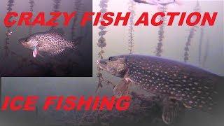 SLAB Panfish & CRAZY Action!