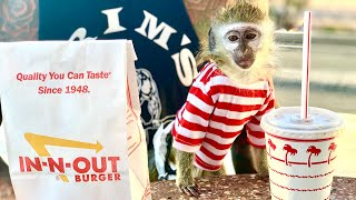 Baby monkey visits IN-N-OUT!