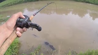 That's Not a Catfish!