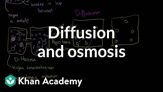 Diffusion and osmosis - Membranes and transport
