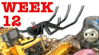 Deadly Redback Black Widow Spider Life Cycle Week 12