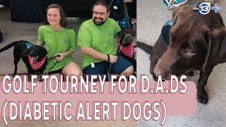 Golf tourney raising money to train diabetic alert dogs