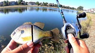 Catching BIG BASS in a TINY Pond!!! (Bank Fishing)