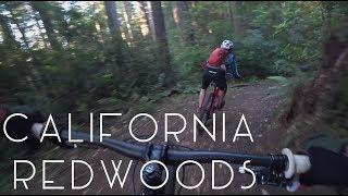 Vanlife: California Redwoods - TMWE S3 E78