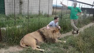 Девушка испугалась паучка а не львов !