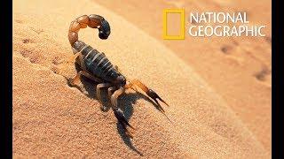 Wild Arabia - Hidden Deep in the Desert | Wonders of the Wildlife (Nat Geo Wild)