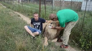 ОЧЕНЬ КРАСИВЫЕ ФОТО с львами Чуком и Геком !