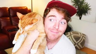 Shane Dawson Denies Disturbing Claim About Cat