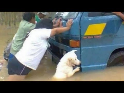 UNBELIEVABLE and UNEXPECTED MOMENTS with FUNNY ANIMALS!