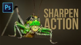 FREE Customizable Action to Sharpen Your Images in Photoshop