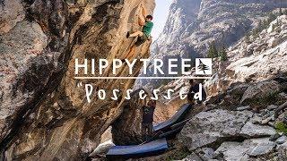 HippyTree / Possessed