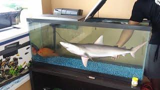 Catching NEW Exotic Pet Fish for AQUARIUM!