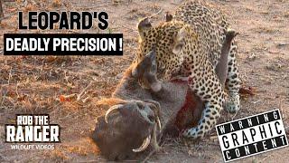 Leopard Vs Warthog: African Wildlife In Action!