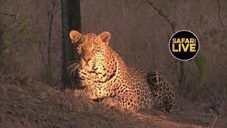 safariLIVE - Sunset Safari - June 15, 2019