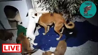 The puppies need a lot of work. They are together with libby now! - Takis Shelter