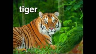 World Animal Adventure, Part 1 | Animal for Kids | Baby Einstein