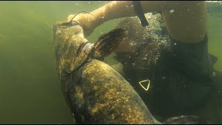 MONSTER CATFISH caught by HAND while Diving with DALLMYD