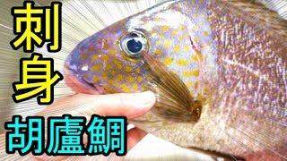 胡廬鯛(コロダイ)を捌き刺身で食べる