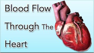 Blood flow through the Heart - Animation