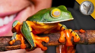 This Frog Will SURPRISE You!
