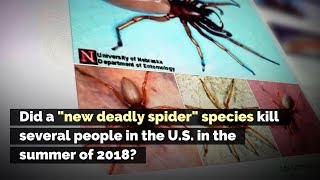 Did a 'New Deadly Spider' Species Kill Several People in the U.S. in the Summer of 2018?