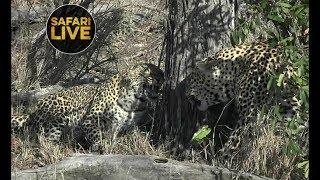 safariLIVE - Sunrise Safari - October 21, 2018