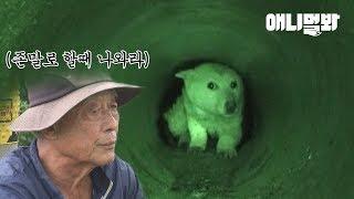 좁은 수로 속에 들어가 7개월째 안 나오는 백구.. ㅣ Dog Living Inside The Waterway With A 30cm Diameter For 7 Months