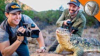 Bravest Cameras for Wildlife!