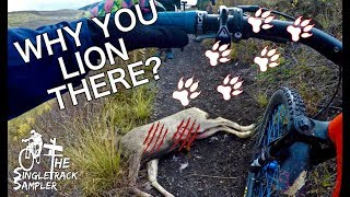 STUNNING MTB RIDE IN CRESTED BUTTE TAKES A TURN WHEN WE INTERRUPT A MOUNTAIN LION'S DINNER // Ep. 5