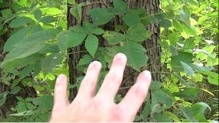 5 Poisonous Plants To Avoid While Foraging Wild Edibles