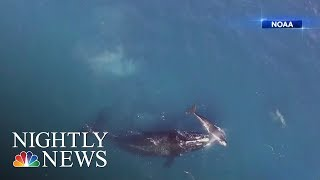 Scientists Warn Seismic Testing For Oil And Gas Puts Marine Life At Risk | NBC Nightly News