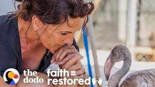 This Woman Dedicated Her Life To Saving Flamingos Who Need Her Help   The Dodo Faith = Restored