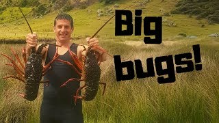 Massive crayfish haul!!! Far north NZ freediving...