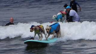 World Dog Surfing Championship in Pacifica