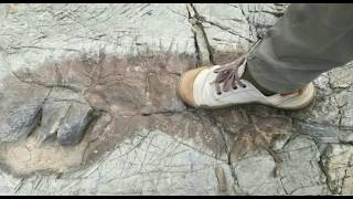 Were There Giants In Bolivia? Lawyer Believes These Are Huge Footprints Near Tarija